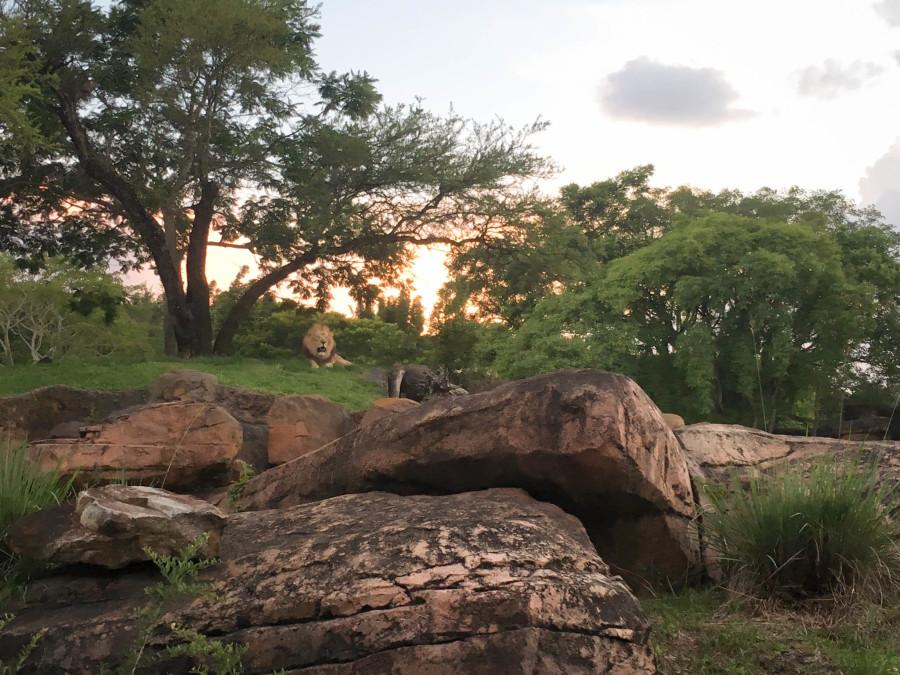 Kilimanjaro Safaris - Walt Disney World 2016 - Our Disney Trip Report | Wit & Wander