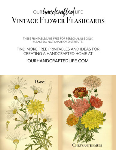 Vintage Science Flash Cards - Our Handcrafted Life