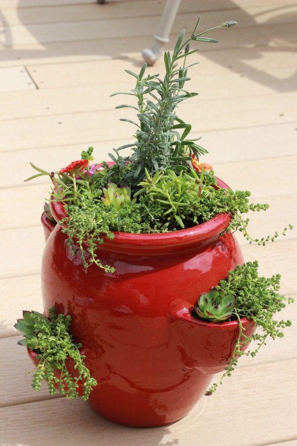 Succulent & Perennial Strawberry Pot