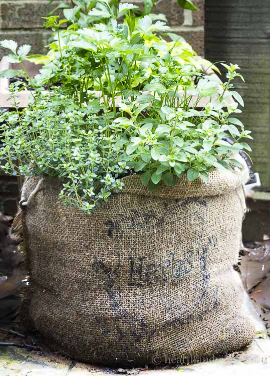 Herb Garden in a Burlap Sack - Easy and Affordable to Make