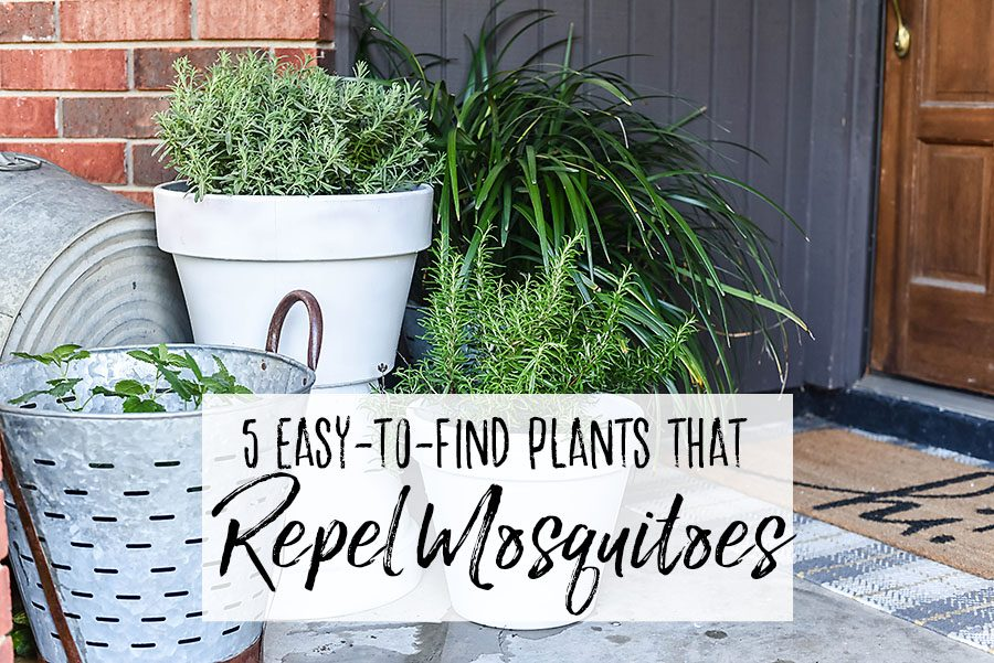 5 Plants That Repel Mosquitoes - Our Handcrafted Life Header