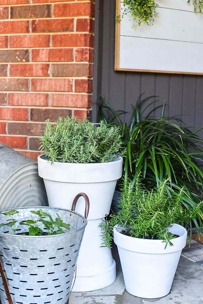5 Plants That Repel Mosquitoes For Your Front Porch Our