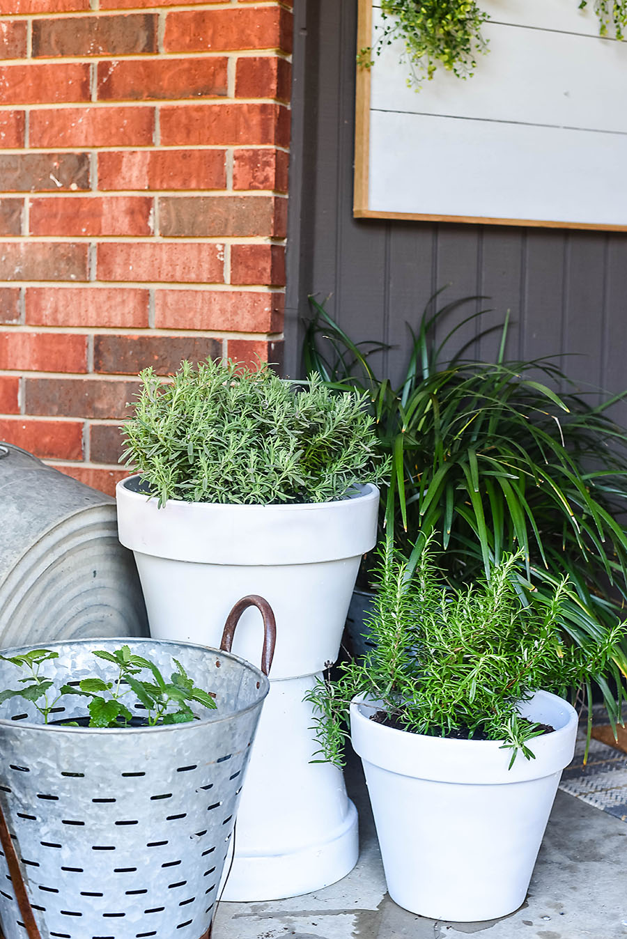 5 Plants That Repel Mosquitoes for Your Front Porch - Our