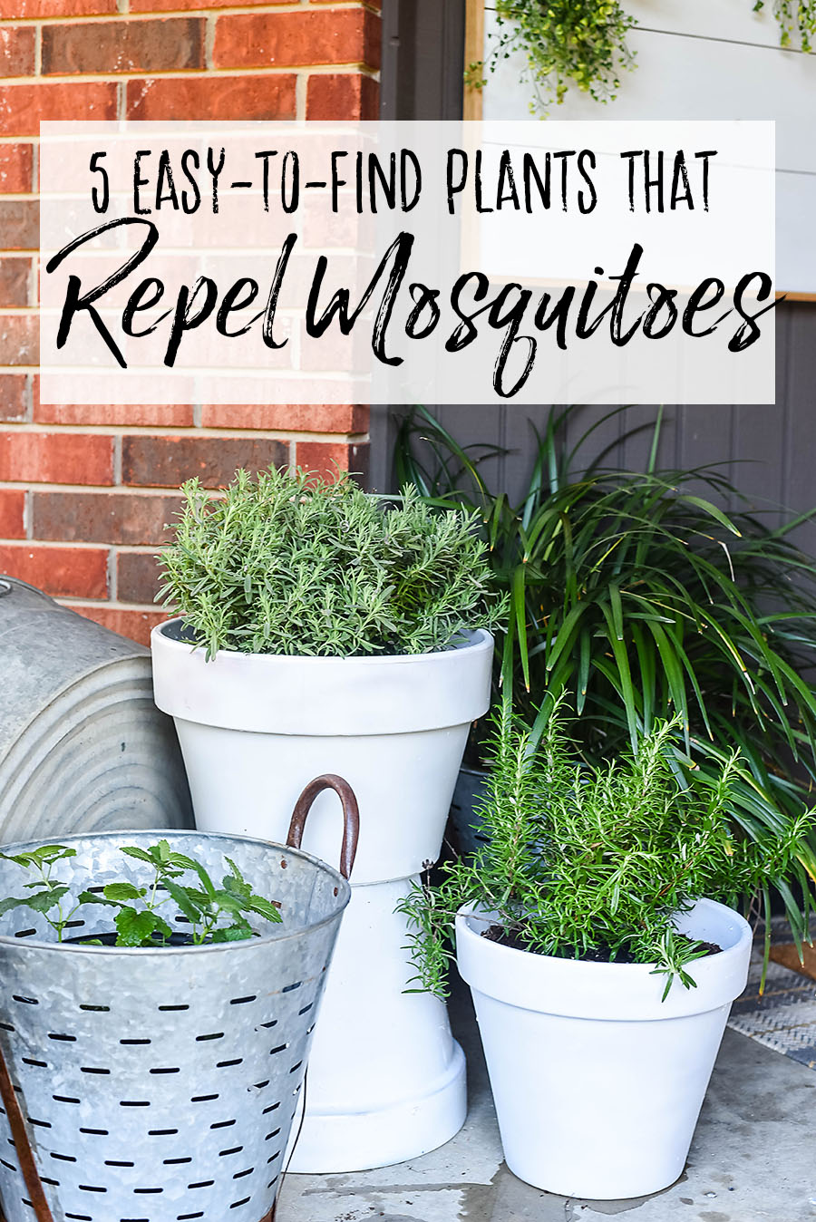 5 Plants That Repel Mosquitoes For Your Front Porch Our Handcrafted Life